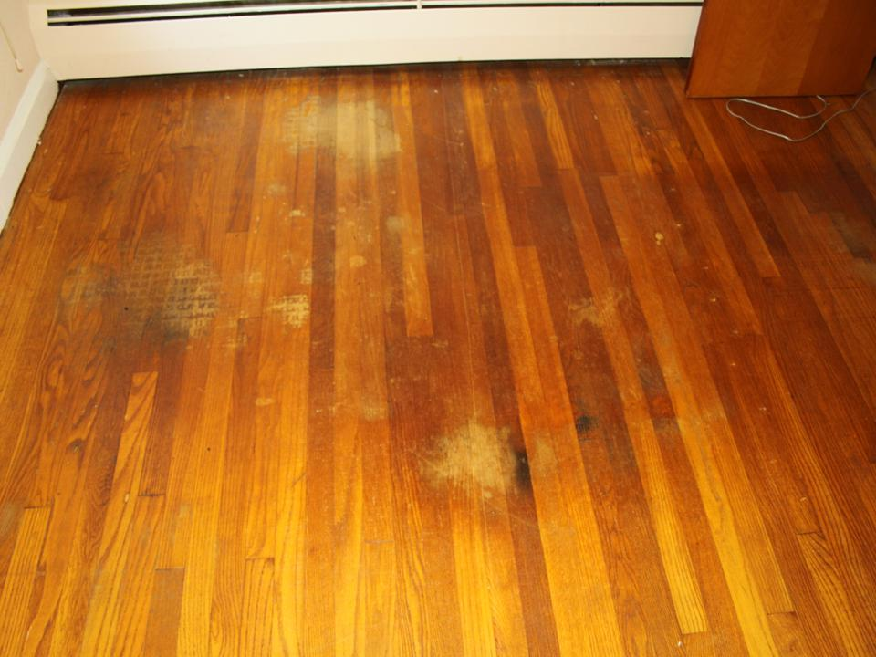 How do i clean dog urine from hardwood floors floors for Hardwood flooring nearby