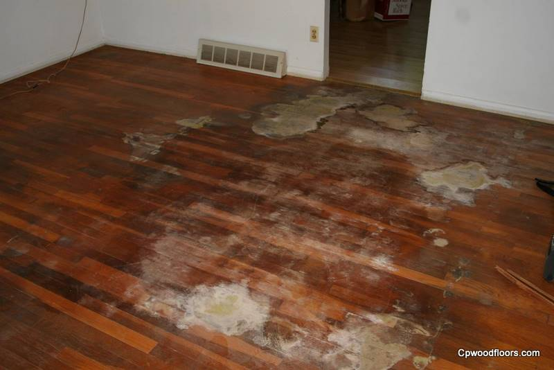 Pet stained floor